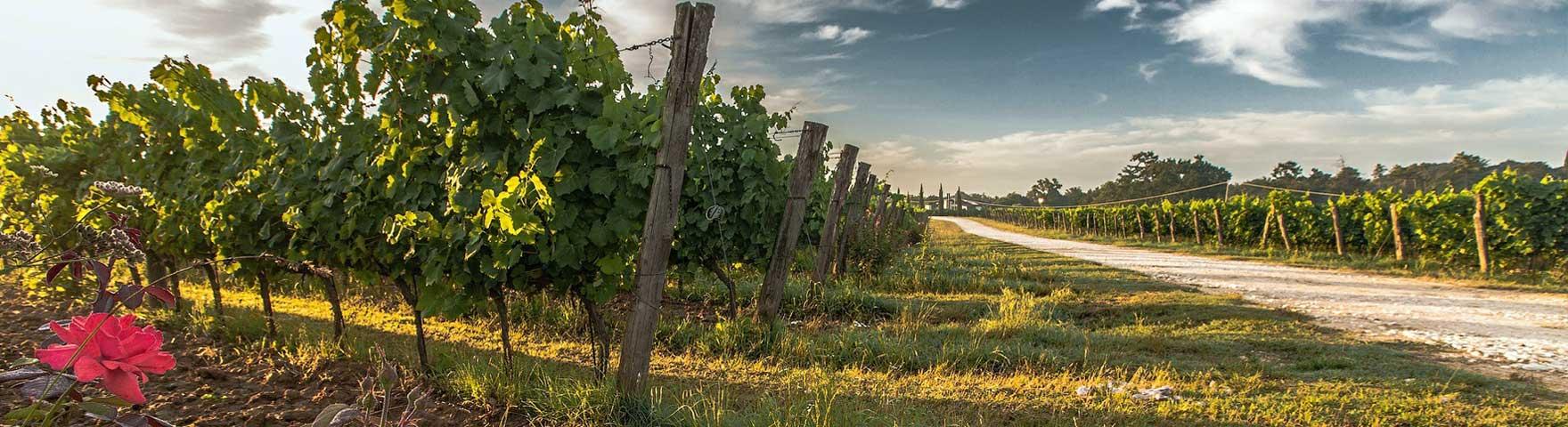 Ockenheim, der Weinort am St. Jakobsberg
