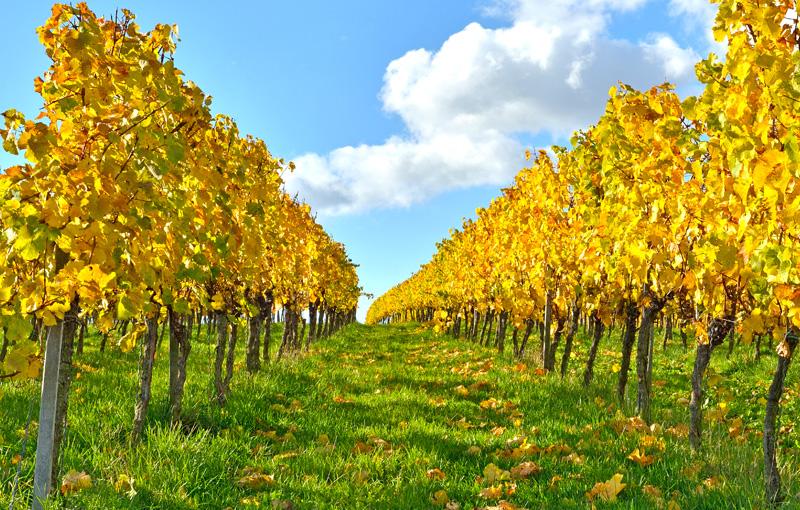 Weingüter und Weinhandel